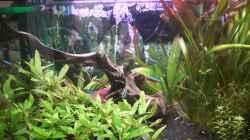 Aquarium Umgestaltung (Richtung Südamerika Scape)