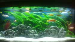 Aquarium Malawibecken 450l