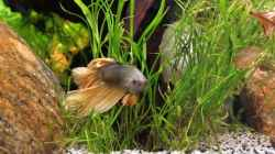 Besatz im Aquarium Quellen Batmund (AUFGELÖST)