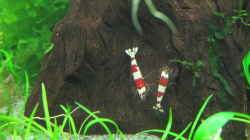 Besatz im Aquarium Hinomaru (AUFGELÖST)