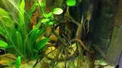 Aquarium Amazonas Ecke nur noch als Beispiel