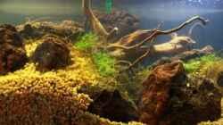 Aquarium Chao phraya
