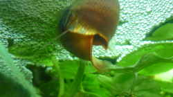 Besatz im Aquarium Rooty & Calulous