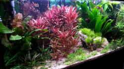 Aquarium Gesellschaftsdickicht