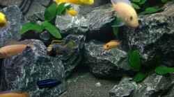 Besatz im Aquarium Becken 30371