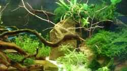 Dekoration im Aquarium Becken 30484 - Das Morgenbecken -