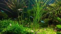 Aquarium Becken 30484 - Das Morgenbecken -