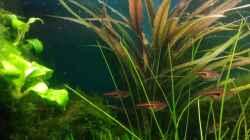 Pflanzen im Aquarium Becken 30484 - Das Morgenbecken -