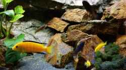 Yellows groß und klein