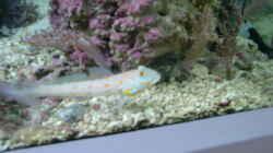 Besatz im Aquarium Raumteiler