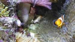 Besatz im Aquarium Fluval Reef M40