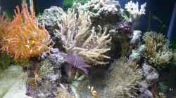 Pflanzen im Aquarium Fluval Reef M40