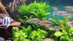 Besatz im Aquarium Becken 30620 - Innerer Frieden