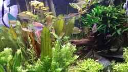 Dekoration im Aquarium Becken 30620 - Innerer Frieden
