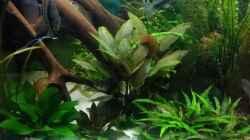 Pflanzen im Aquarium Becken 30620 - Innerer Frieden
