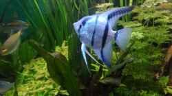 eins der blauen Männchen