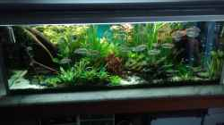 Aquarium Becken 30620 - Innerer Frieden