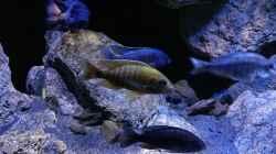 Besatz im Aquarium Becken 30628