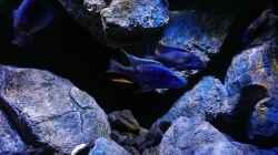 Aquarium Becken 30628