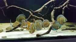 Besatz im Aquarium Wurzelbiotop 2 (Nur noch als Beispiel)