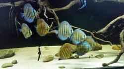 Aquarium Wurzelbiotop 2 (Nur noch als Beispiel)