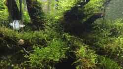 Aquarium i love leaves !