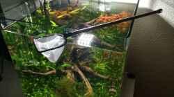 Technik im Aquarium i love leaves !