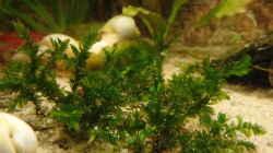 Pflanzen im Aquarium Die Herausforderung