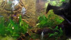 Besatz im Aquarium Die Herausforderung