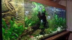 Aquarium Die Herausforderung