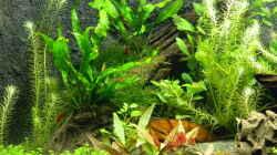 Aquarium Neo´s World Nur noch als Beispiel