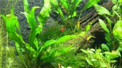 Besatz im Aquarium Neo´s World Nur noch als Beispiel