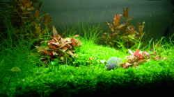 Aquarium Dry Start Scape Mein Nanoprojekt