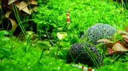 Besatz im Aquarium Dry Start Scape Mein Nanoprojekt