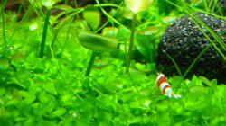 Pflanzen im Aquarium Dry Start Scape Mein Nanoprojekt