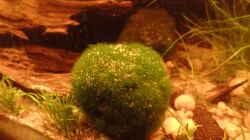 Pflanzen im Aquarium Kunterbunt