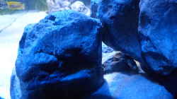 Dekoration im Aquarium Dream of Njassasee