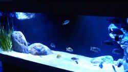 Aquarium Dream of Njassasee