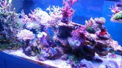 Pflanzen im Aquarium Juwel Rio 180