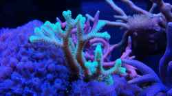 Besatz im Aquarium Juwel Rio 180
