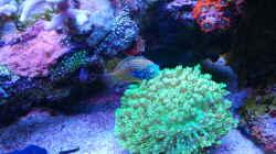 Dekoration im Aquarium Juwel Rio 180