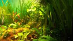 Aquarium Rio 400 (existiert nicht mehr)