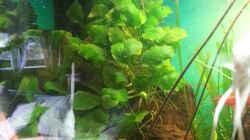 Pflanzen im Aquarium Rio 400 (existiert nicht mehr)