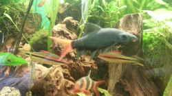 Besatz im Aquarium Rio 400 (existiert nicht mehr)