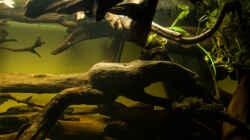 Dekoration im Aquarium L 201