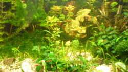 Aquarium mini becken