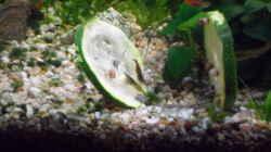 Dekoration im Aquarium mini becken