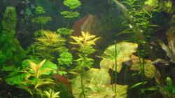 Besatz im Aquarium mini becken