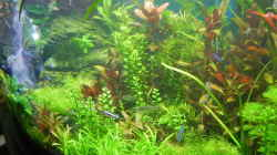 Pflanzen im Aquarium Becken 30905