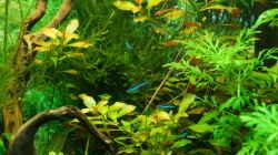 Pflanzen im Aquarium Lido 120
